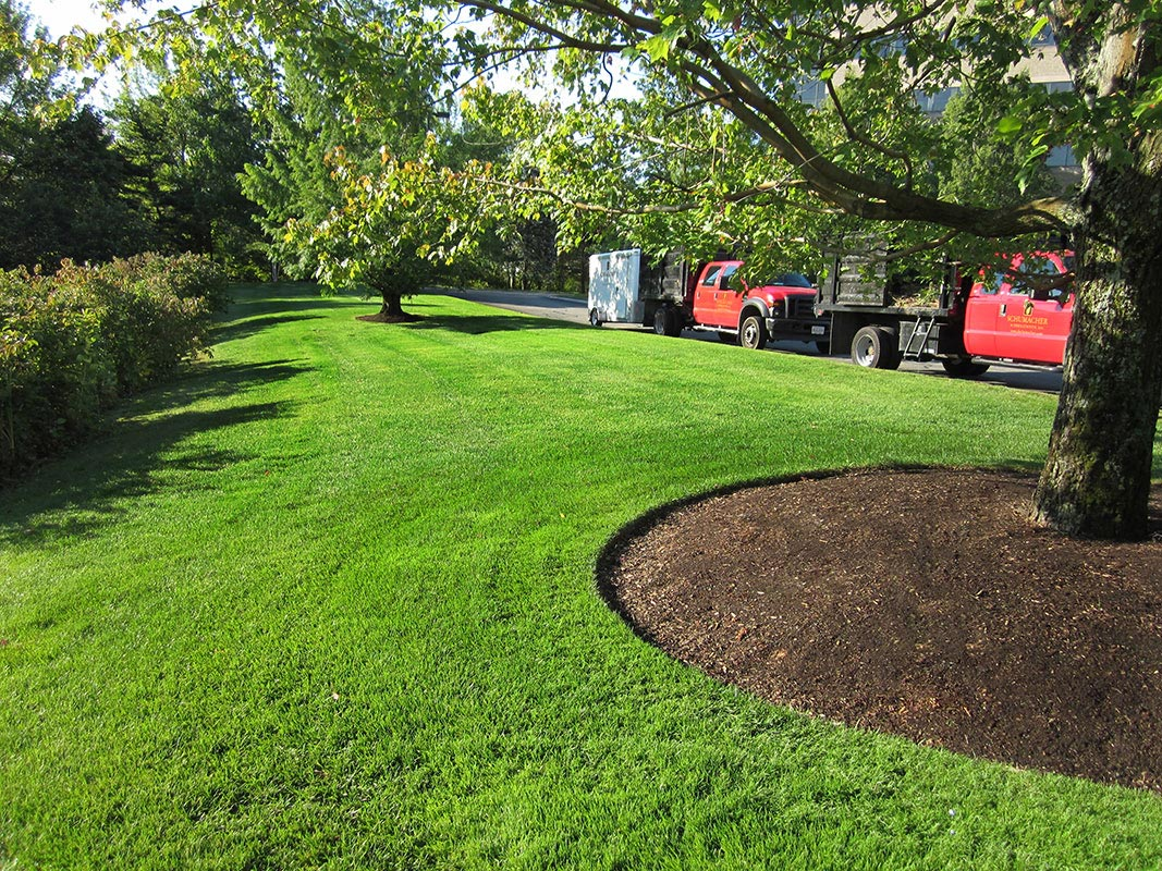 Commercial Lawn Maintenance C K C Landscaping